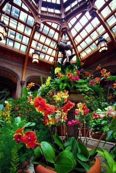 Orchids fill the Winter Garden inside #Biltmore House in Asheville NC - during Biltmore Blooms