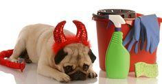 Veja as dicas de limpeza para quem tem cães e gatos em casa                                                                                                                                                                                 Mais