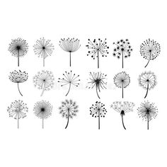 Illustration about Dandelion Fluffy Seeds Flowers Hand Drawn Doodle Style Black And White Drawing Vector Icons Set. Illustration of hand, doodle, fluffy - 70180632 Doodle Drawings, Doodle Art, Doodle Frames, Floral Doodle, Flower Doodles, Doodle Flowers, Hand Doodles, Black And White Drawing, Black And White Doodle