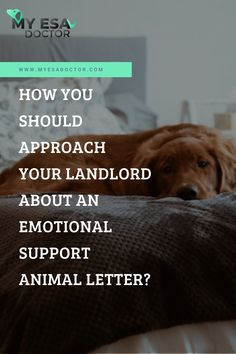 According to a 2017-2018 survey performed by the American Pet Products Association, more than 68 percent of American households own a pet. This accounts for around 84.6 millions households. Many pet owners go the extra mile to ensure that their pet lives with them. But this doesn't always happen especially if you rent a house, condo or an apartment. This is where an emotional support animal letter can be of help. Click to know more.