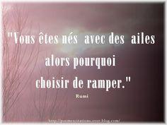 """Rumi """"Vous êtes nés avec des ailes alors pourquoi choisir de ramper."""" Rumi Citations de Rumi Autres citations"""