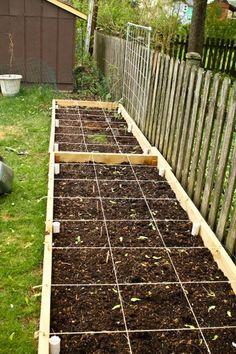 Garden Salad Box, plus some.