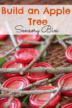 This apple tree sensory bin is perfect for talking about colors while exploring nature. We worked on building our own apple tree with pieces from nature.