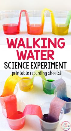 Walking water science experiment that is so much fun! This rainbow science activity is super cool! #scienceforkids #scienceexperiments #STEM #preschoolscience