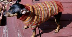 Ravelry: Autumn Stripes Crochet Min Pin Sweater pattern by Stacie LaBean.for the Nut? Crochet Dog Sweater Free Pattern, Crochet Jacket Pattern, Dog Sweater Pattern, Dog Pattern, Free Crochet, Crochet Patterns, Sweater Patterns, Dog Crochet, Crochet Ideas