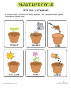why we celebrate easter printable preschool | Plant cycle cards to print and use to sequence or use as matching ...