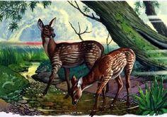 Palaeomeryx kaupi by Bernard Long Prehistoric Wildlife, Prehistoric World, Prehistoric Creatures, Wildlife Art, Alien Creatures, Mythical Creatures, Extinct Animals, Fauna, Natural History