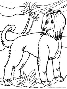 dog color pages printable afghan hound dog coloring pages 003 - Color Printouts