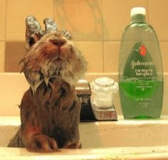 I just washed my Hare...and can't do a thing with it!!!
