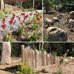 Another amazing garden transformation by Poppy's Landscape Team! Why not let Darren and the team use their skills to create your dream garden Beach Landscape, Landscape Design, Dream Garden, Home And Garden, Amazing Transformations, Dry Creek, Native Plants, Pathways, Amazing Gardens
