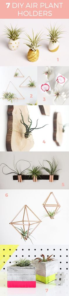 Pinterest: Miatellax ☾        ∞⍣⇻ṃιατεℓℓα⇺⍣∞ Air plants often only need to be sprayed with water once every fortnight (15 days). #WeddingIdeasIndoor