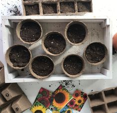 How to grow sunflowers from seeds! Want to grow an eye-catching and budget friendly garden this summer? Use my step-by-step guide on how to start, grow, and plant sunflowers from seeds for beautiful blooms throughout the summer! Planting Sunflower Seeds, Sunflower Seedlings, Planting Sunflowers, Planting Seeds, Growing Sunflowers From Seed, How To Grow Sunflowers, Organic Gardening, Gardening Tips, When To Plant Seeds