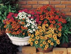 12 Outdoor Plants You Can't Kill