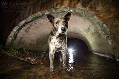 Fotógrafa Kaylee Greer, Dog Breath Photography