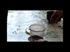 Эффективное приспособление для проращивания семян. - YouTube