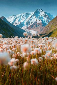A mountain meadow in bloom, Tian Shan, Kyrgyzstan. The Tian Shan, is a large system of mountain ranges located in Central Asia. Tian Shan, Beautiful Places In The World, Oh The Places You'll Go, Wonderful Places, Beautiful Things, Nature Photography, Travel Photography, Adventure Photography, Mountain Photography