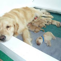 My Friends' Proud Momma And Her New Pups