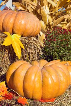 Planting a fall garden? Here's 11 crops and vegetables you can plant in August for a fall harvest! It's almost pumpkin season - time for late summer gardening! When To Plant Pumpkins, Planting Pumpkins, Kill Weeds Naturally, Acid Loving Plants, Tomato Seedlings, Raising Backyard Chickens, Organic Gardening Tips, Autumn Garden, Landscaping Plants