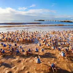 Soldier Crabs marching passed Kingfisher Bay Resort on Visit Fraser Coast. Awesome capture by Peter Meyer Photography.