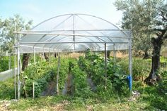 Greenhouse for vegetablegarden