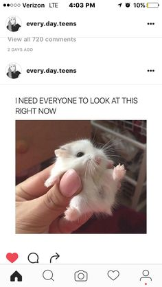 OML ITS SO CUTE AND SMOL AND FLUFFY