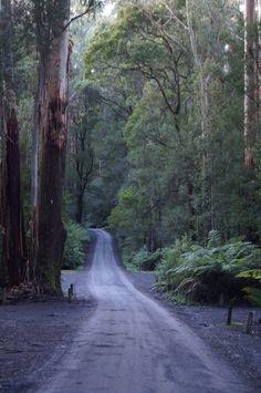 Road to Triplet Falls, Otway Ranges, - Victoria, Australia