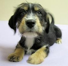 Moogey was ADOPTED!