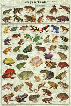 Frogs & Toads of the World Educational Poster Posters at AllPosters.com