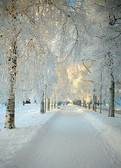 Snowy Morning in Sweden