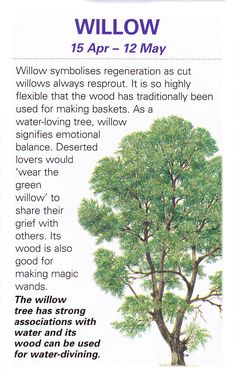 Sacred celtic trees Willow. Willows are beautiful, supple and bend with the storms so they don't break.