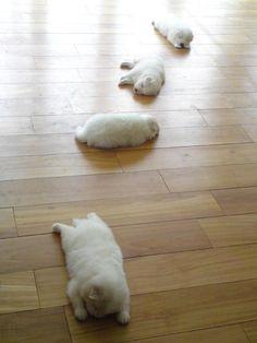 sleepy puppies!