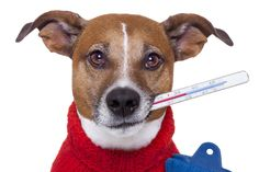 Pet Emergencies - How prepared are you?