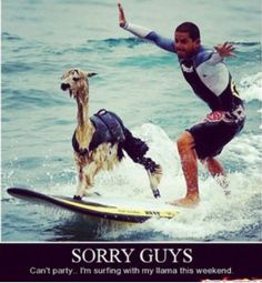 My biggest wish: to surf with a llama