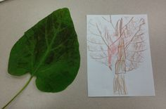 Monster leaf rubbings. The leaf made the whole tree!
