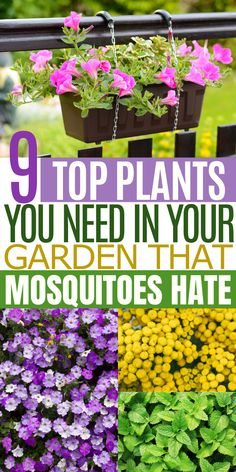 Pest Fighting Plants That'll Save Your Summer Garden Garden Yard Ideas, Lawn And Garden, Summer Garden, Garden Beds, Garden Projects, Backyard Ideas, Garden Tools, Outside Plants, Outdoor Plants