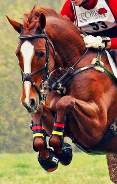 Cross country.... Look at the power behind that horse...