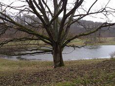 Fyledalen - tyst och stilla, så här i februari...