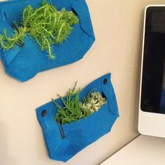 A fun way to have plants inside.....Woollypocket
