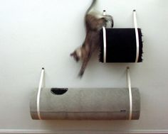 Cat Climbing Barrels by IthcyKnee by #moderncat #cats