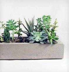 zimmerpflanzen topfpflanzen sukkulenten steintöpfe