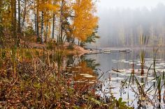 Peaceful foggy autumn lake view with vibrant fall colors in Finl -