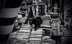Photograph the cat reader by Max Bedendi on 500px