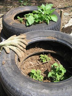 Potato Tires Stack Growing Vegetables Planting Veggies Vegetable Garden