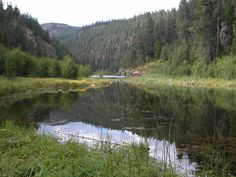 Trout Lake flows into Trout Creek in Ferry County. Washington State, Trout, Mountains, Nature, Travel, Naturaleza, Viajes, Brown Trout, Trips