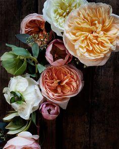 Flowers Photography by Kari Herer © Kari Herer
