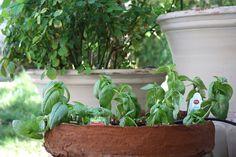 How to Plant an Herb Garden - Wendys Hat #garden #herbs #gardeningtips