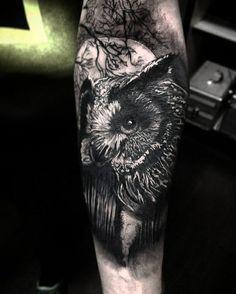 Owl/forrest