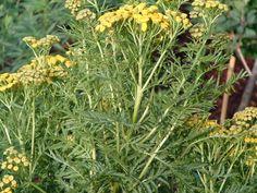 Site Archéologique, Herbs, Plants, Gardens, Roman, Herb, Plant, Planets, Medicinal Plants