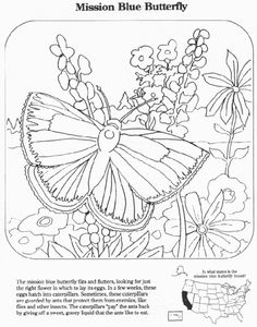 picture of a butterfly to color - Butterfly Color Page 3