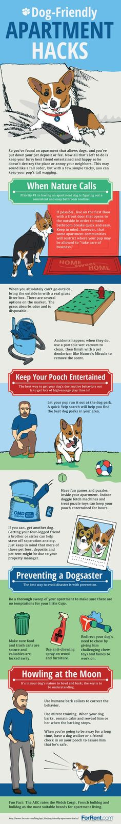 Great hacks for your dog (or the dog you are looking adopt)! It can be difficult to have a pet in an apartment, but these ideas make it easy.